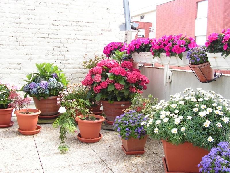 question pour future jardiniere de bego peut etre Pict0018