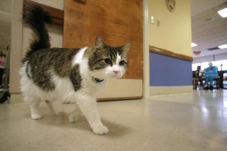 Oscar, le petit chat qui pressent la mort 20070710
