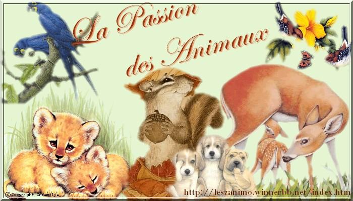 •°o.O La passion des animaux O.o°•