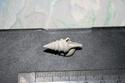 [résolu]Pliocéne de Castell' Arquato (Italia) Img_6011