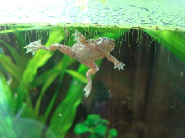 Mes tites grenouilles Dsc09010