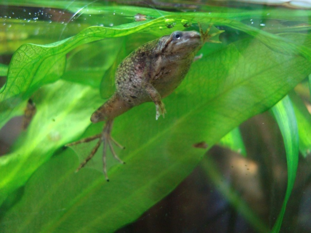Mes tites grenouilles Dsc09510