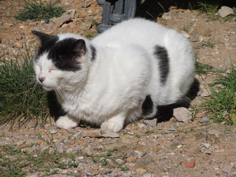 amoureux des chats Img_0411