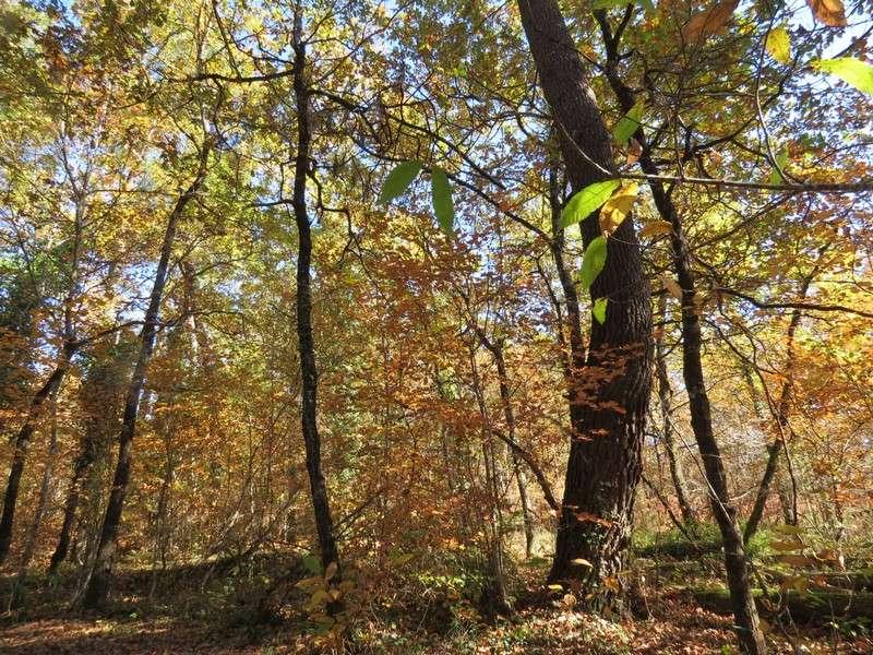l'automne et ses couleurs  sont là Img_0710