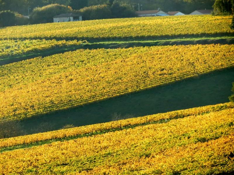 l'automne et ses couleurs  sont là Img_0812