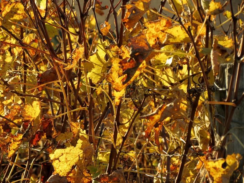 l'automne et ses couleurs  sont là Img_0815