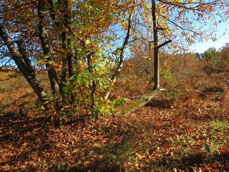 l'automne et ses couleurs  sont là Img_0817