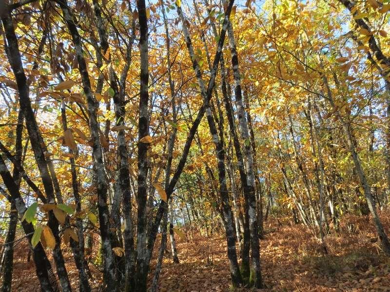 l'automne et ses couleurs  sont là Img_0818