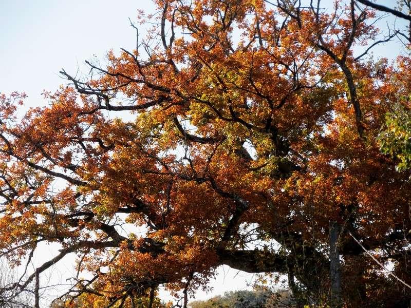 l'automne et ses couleurs  sont là Img_0819
