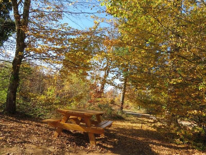 l'automne et ses couleurs  sont là Img_0910