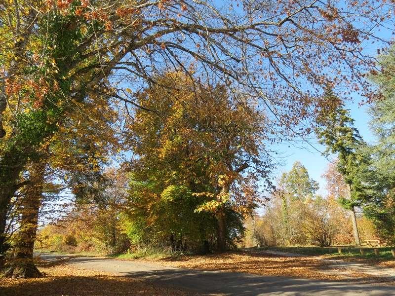 l'automne et ses couleurs  sont là Img_0911
