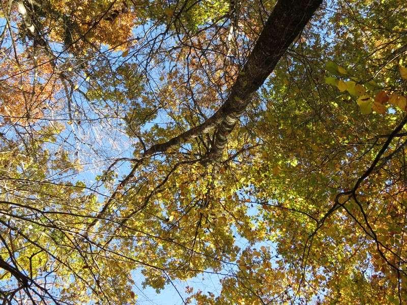l'automne et ses couleurs  sont là Img_0912