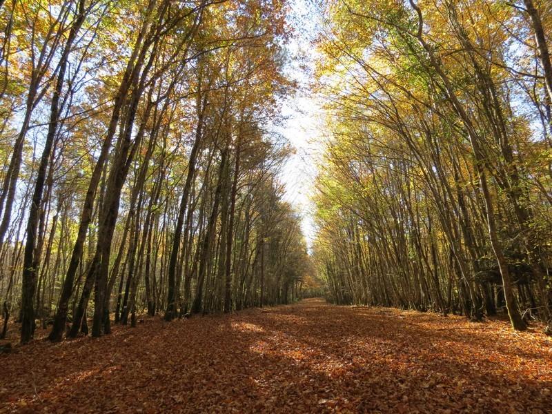 l'automne et ses couleurs  sont là Img_0913