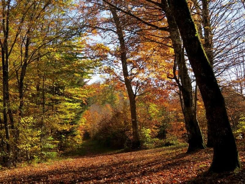 l'automne et ses couleurs  sont là Img_1010