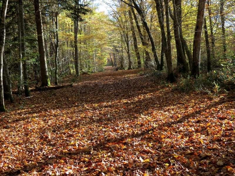 l'automne et ses couleurs  sont là Img_1011