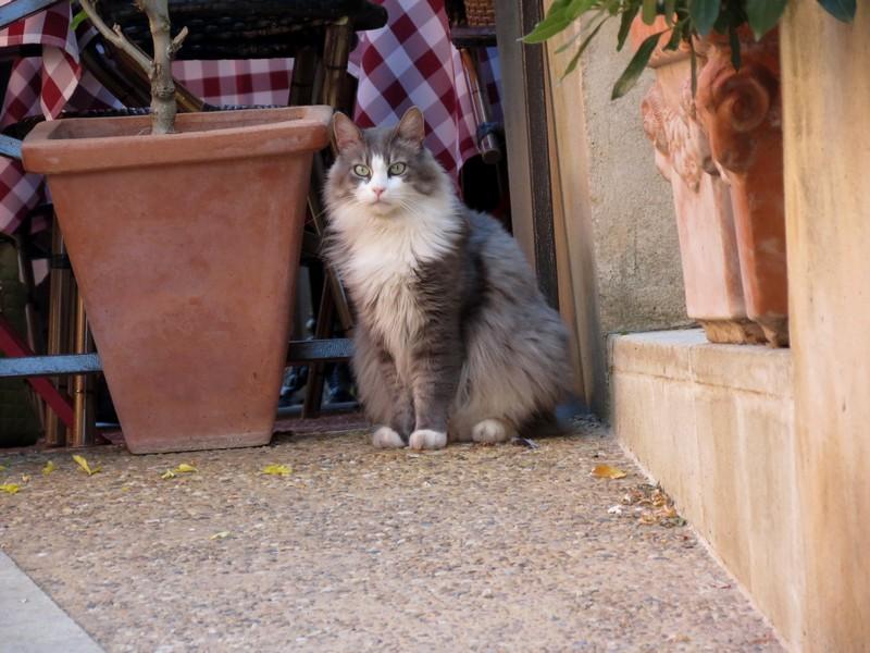 amoureux des chats Img_7211