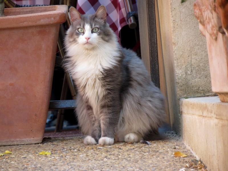 amoureux des chats Img_7212