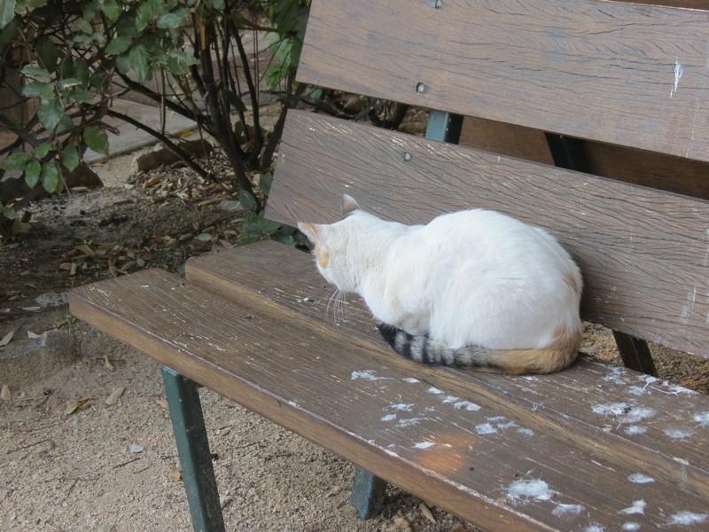 amoureux des chats Img_7213