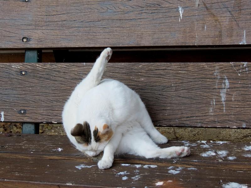 amoureux des chats Img_7215