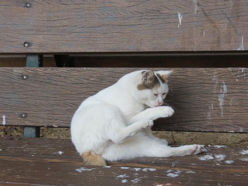 amoureux des chats Img_7216
