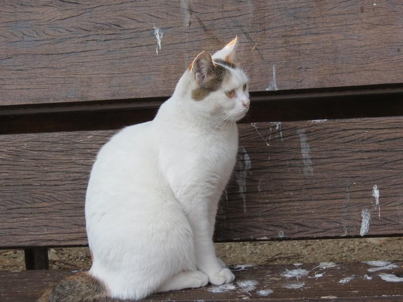 amoureux des chats Img_7220
