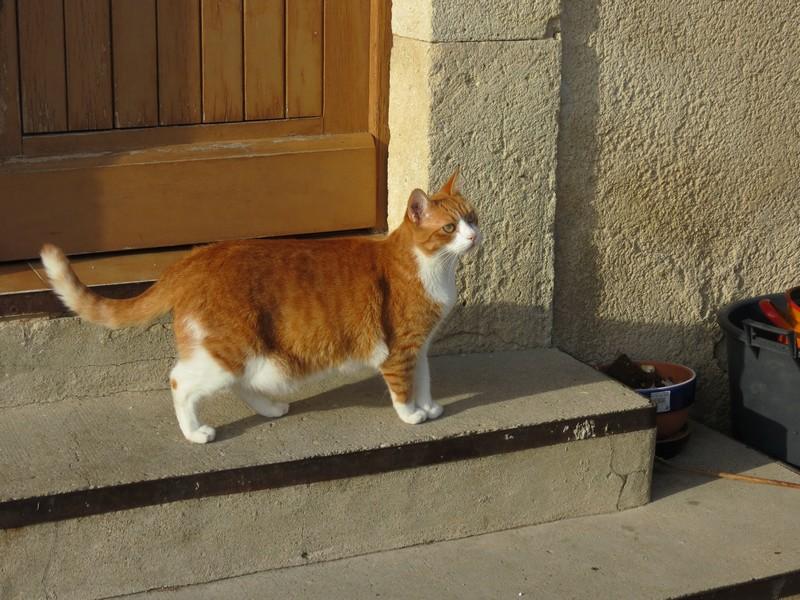 amoureux des chats Img_7710