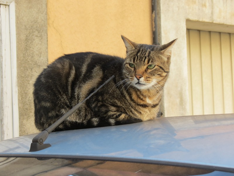 amoureux des chats Img_9010