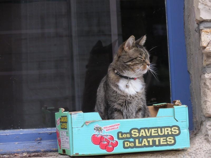 amoureux des chats Img_9810