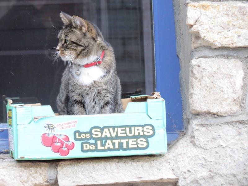 amoureux des chats Img_9811