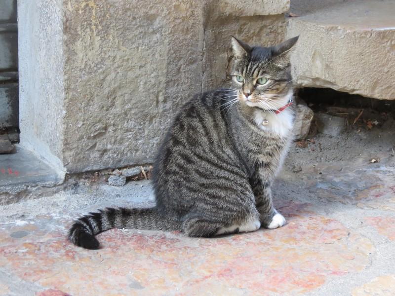 amoureux des chats Img_9812