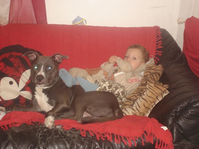 """Polemique sur les chiens dit """"dangereux"""" Dsc03110"""
