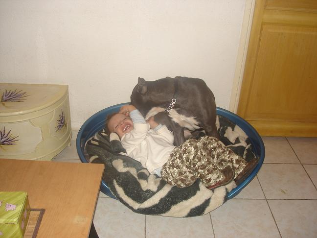 """Polemique sur les chiens dit """"dangereux"""" Dsc03111"""