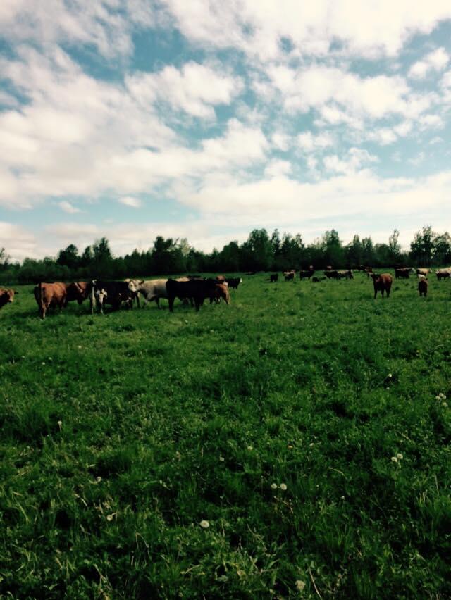 État de mon élevage 11389910