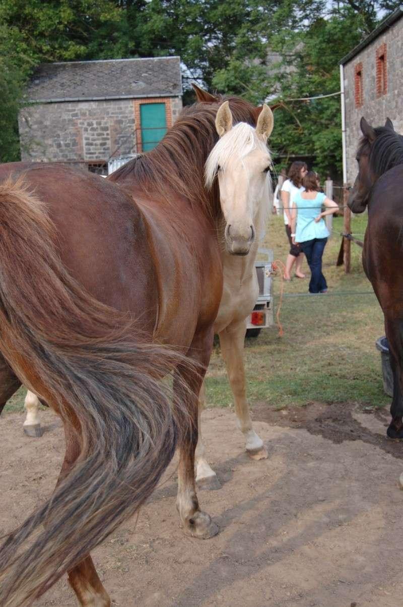 Awrigha des Lucioles 2011-012