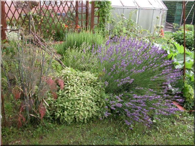 Les plantes des ami(e)s Aromat10