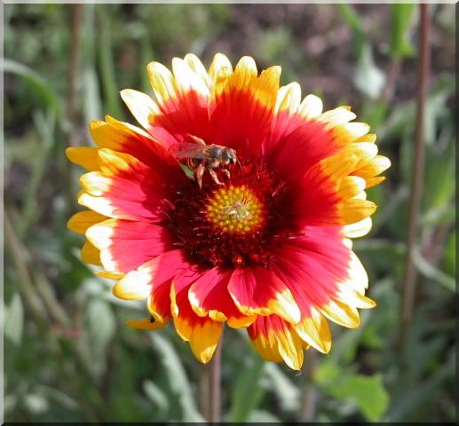 Les plantes des ami(e)s Gailla10