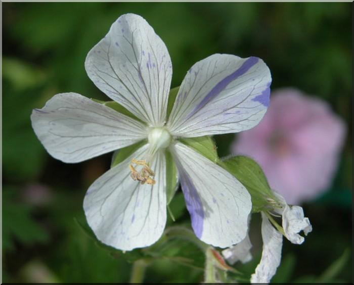 Les plantes des ami(e)s Gyrani12