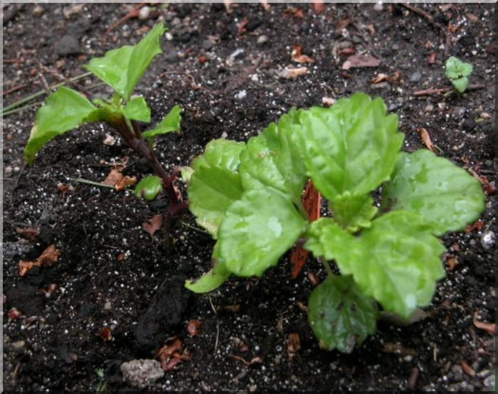 Les plantes des ami(e)s Lierre10