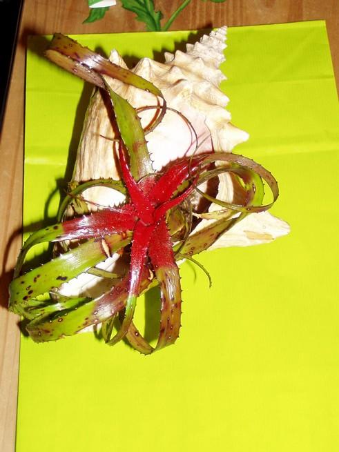 2ème salon international d'orchidées à Oudenaarde Sans_t12