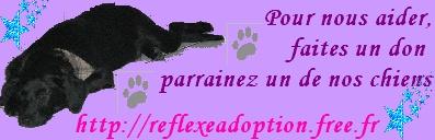 Reflexe adoption!.. Notre but et nos actions Bandea10