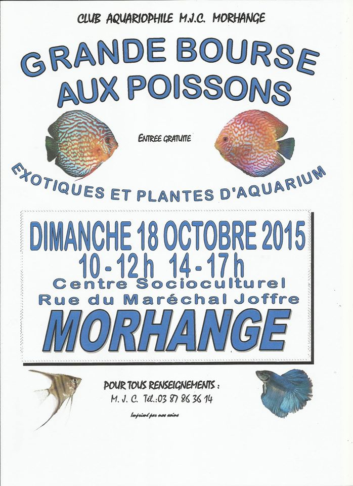 Bourse de Morhange - 18 octobre 2015 12010711