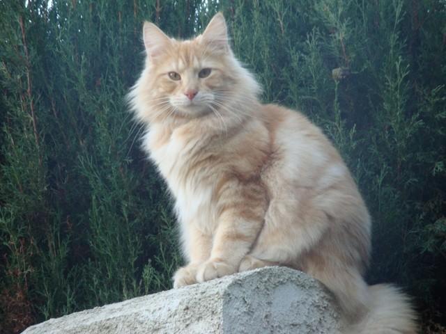 Saurez-vous reconnaître votre chat : jeu n° 18 Drakar10