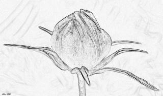 Créer un dessin à partir d'une photo (façon rapide) Lumiar15