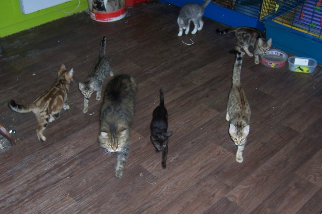 mes chatons en fa Twiste40