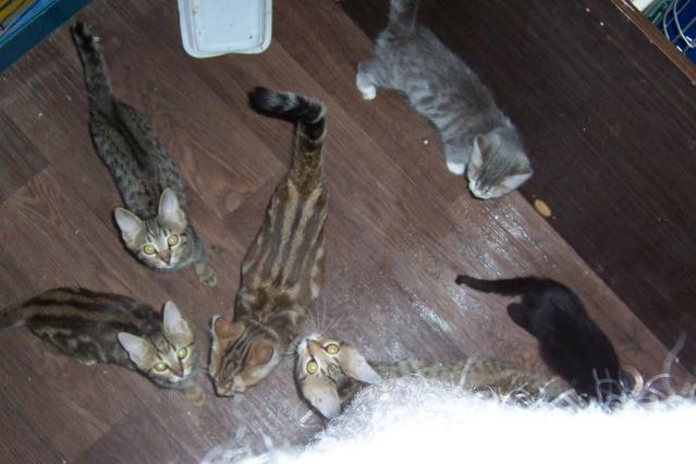 mes chatons en fa Twiste42