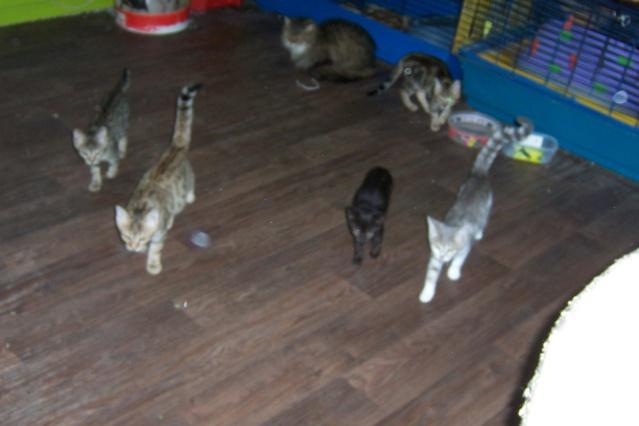 mes chatons en fa Twiste43