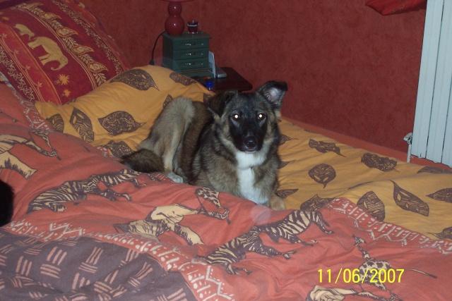 Jeune chienne Berger Roumain 7 mois - en France  93 depuis fevrier (93) 100_2112