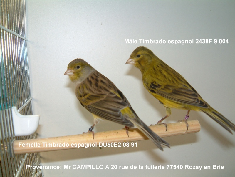chant canaris timbrado