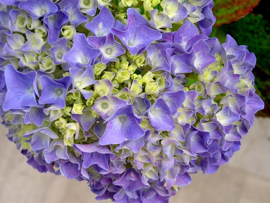 Fleurs ... tout simplement 20071010