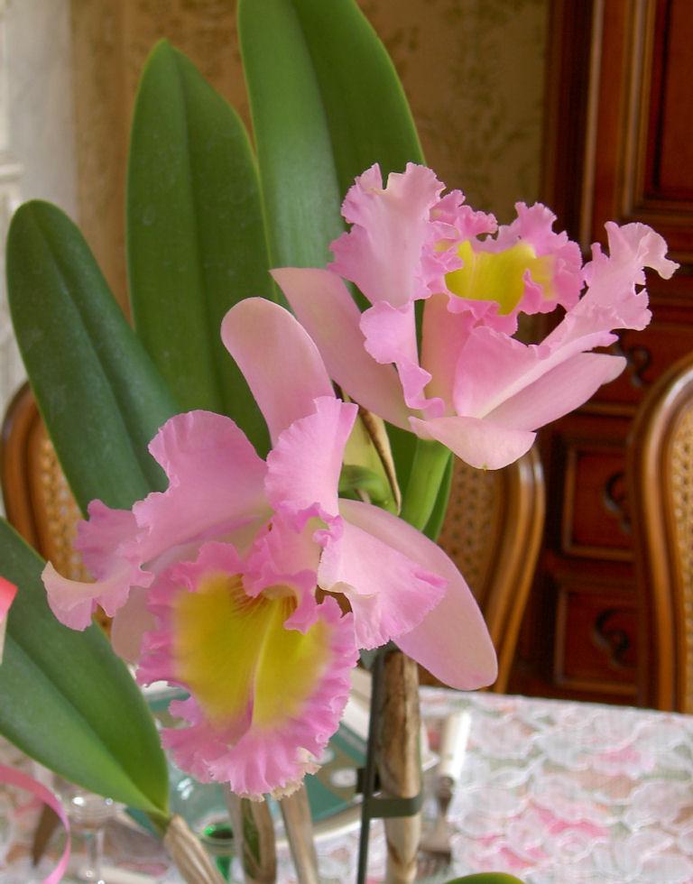 Fleurs ... tout simplement - Page 3 20071011